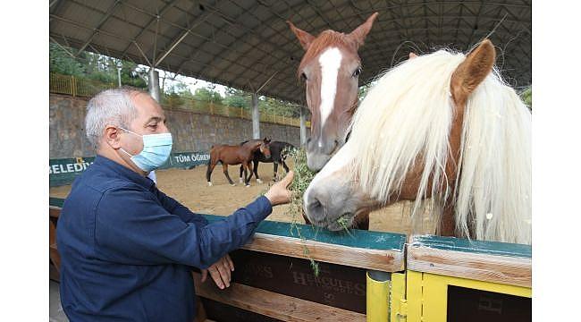 Başkan Büyükgöz'den atlı eğitime davet