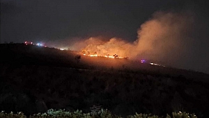 Gebze'de dilek balonu ormanı yaktı!