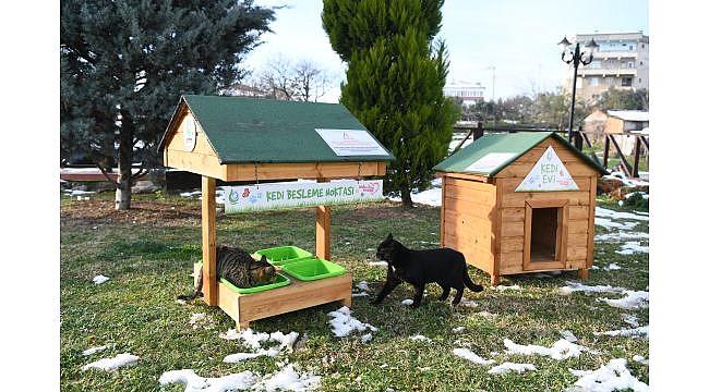 Çayırova Belediyesi sokak hayvanları sahip çıkıyor!