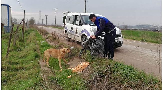 Kartepe'de sokak hayvanları mamasız kalmıyor