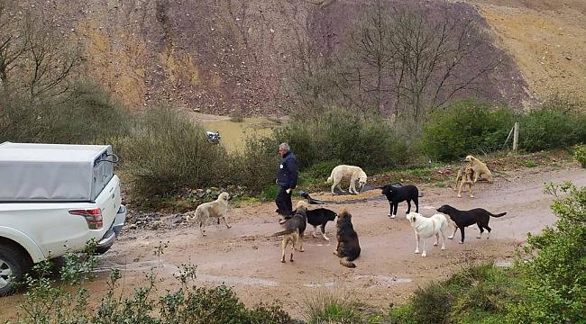 Gebze Belediyesi sokak hayvanlarını önemsiyor!